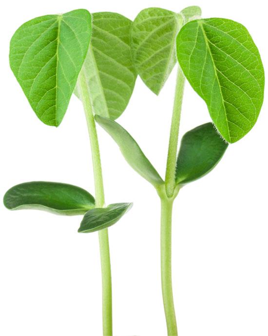 Cultivo de soja - Produtécnica